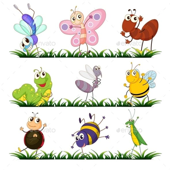 Insect Action Graphics, Designs & Templates from GraphicRiver
