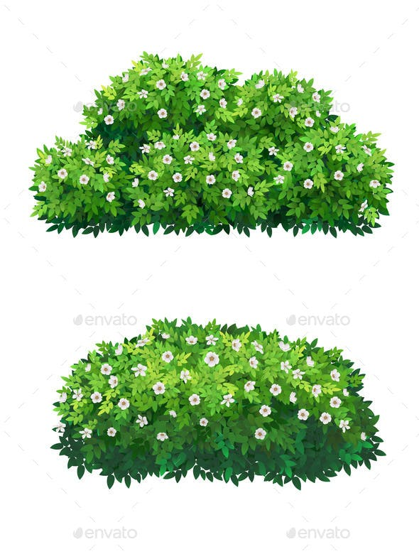 Green Bushes And Tree Crown With White Flowers By Belander