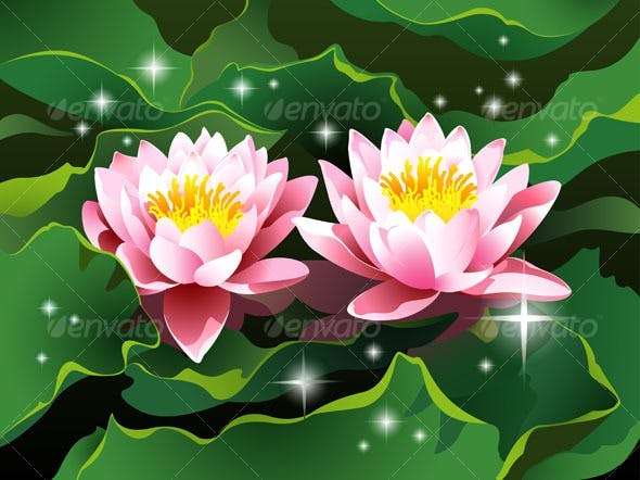 Lotus Flowers In A Pond By Silvertiger Graphicriver