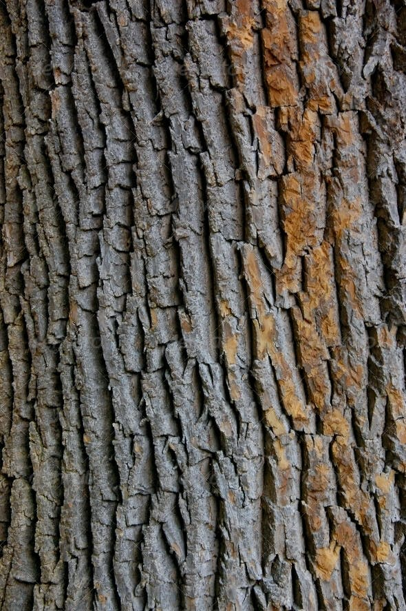 Texture Closeup Shot Of Brown Tree Bark Wood Textures