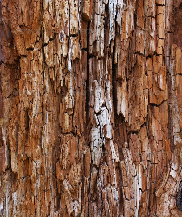Rotted Tree Bark Wood Textures